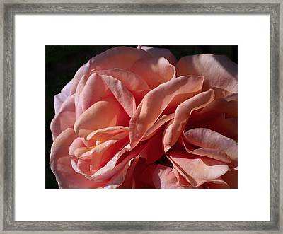 Warm Wishes Framed Print by Rona Black