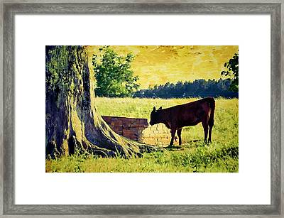 Warming Up In The Morning Glow Framed Print by Jan Amiss Photography