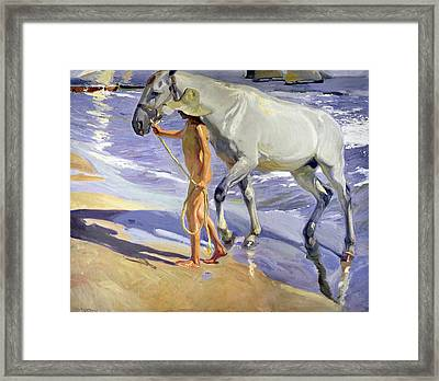 Washing The Horse Framed Print by Joaquin Sorolla y Bastida
