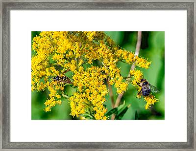 Wasp And Bee Business Framed Print by Steve Harrington