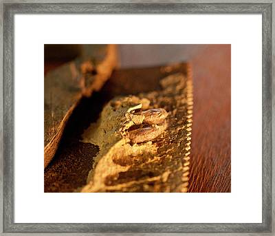 Wasp Larvae And Handsaw Framed Print by Wilma  Birdwell