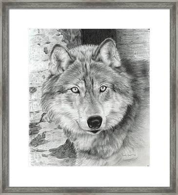 Watchful Eyes Framed Print by Carla Kurt