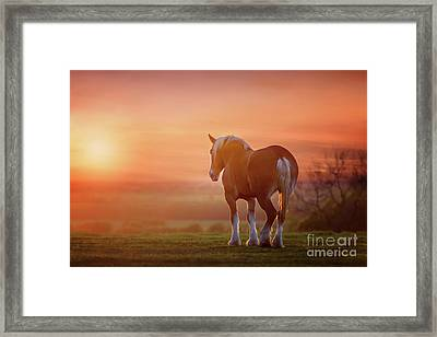 Watching The Sunset Framed Print by Tamyra Ayles