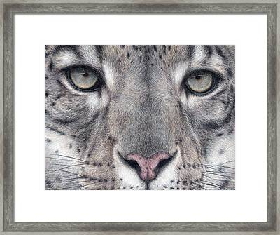 Watching You...snow Leopard Framed Print by Pat Erickson