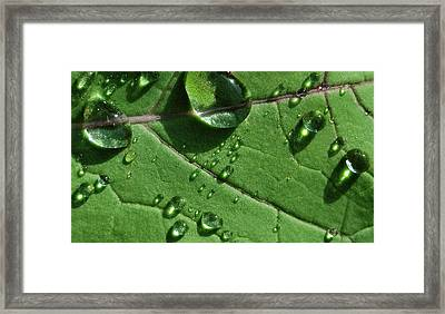 Water And Light Framed Print by Marilynne Bull
