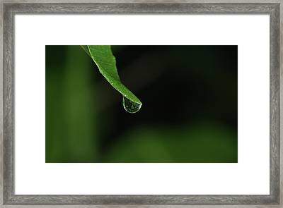 Water Drop Framed Print by Richard Rizzo