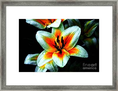 Water Droplet Covered White Lily  Framed Print by Andee Design