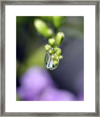 Water Droplet Iv Framed Print by Richard Rizzo