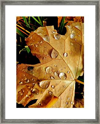 Water Drops Framed Print by Liz Vernand
