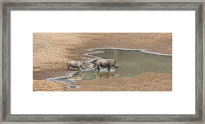 Water For Rhinos Framed Print by Stephen Stookey