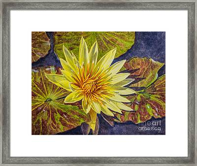 Water Lilies 2 Framed Print by Fiona Craig