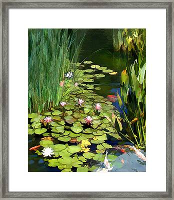 Water Lilies And Koi Pond Framed Print by Elaine Plesser