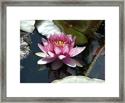 Water Lily 2 Framed Print by Valerie Ornstein