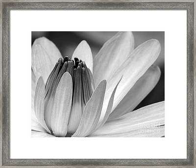 Water Lily Opening Framed Print by Sabrina L Ryan