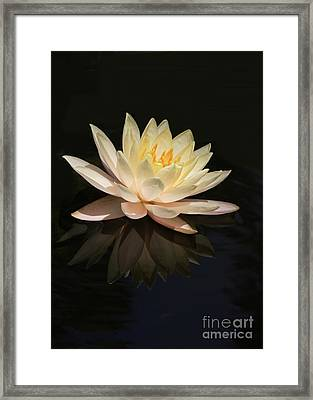 Water Lily Reflected Framed Print by Sabrina L Ryan