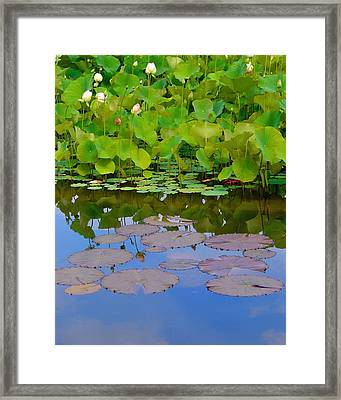 Water Lily Sky Framed Print by Nada Frazier