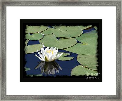 Water Lily With Black Border Framed Print by Carol Groenen