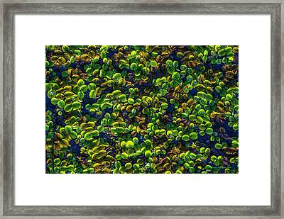 Water Plants Framed Print by Marvin Spates