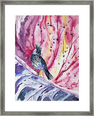 Watercolor - Black-crested Tit-tyrant Framed Print by Cascade Colors