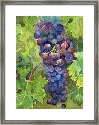 Watercolor Grapes Painting Framed Print by Olga Shvartsur