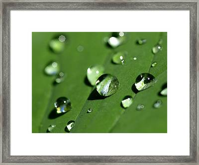 Waterdrops Framed Print by Melanie Viola