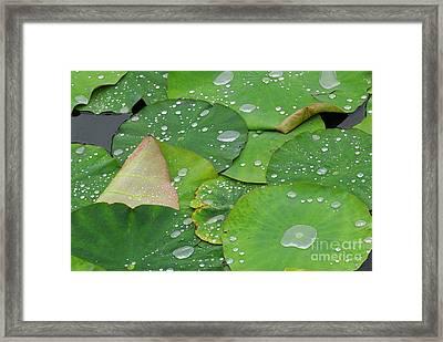 Waterdrops On Lotus Leaves Framed Print by Silke Magino