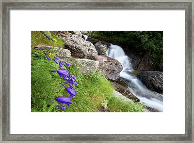 Waterfalls And Bluebells Framed Print by Mircea Costina Photography