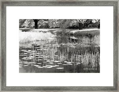 Waterlife Framed Print by Ron Evans