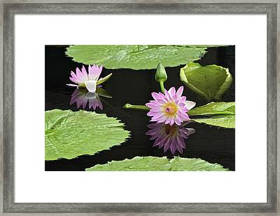 Waterlily Reflections In Dark Water Framed Print by Byron Varvarigos