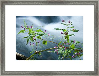 Waterscapes - Lilac Blossom Framed Print by Andy-Kim Moeller