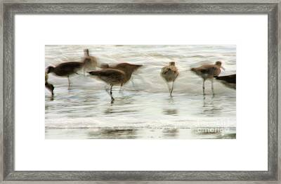 Plundering Plover Series Framed Print by Angela Rath