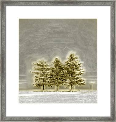 We Three Trees Framed Print by Bill Tiepelman