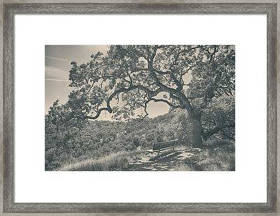 Weary Framed Print by Laurie Search