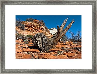 Weathered Check Framed Print by Christopher Holmes