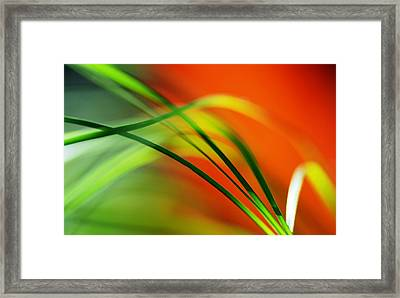 Weeds Framed Print by Catherine Lau