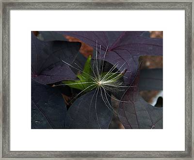 Weeds N Seeds Framed Print by Skip Willits