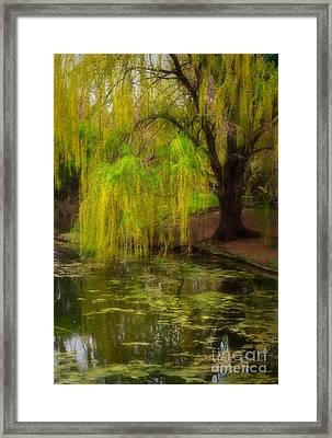 Weeping Pond Framed Print by Fred Lassmann