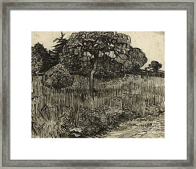 Weeping Tree Framed Print by Vincent Van Gogh