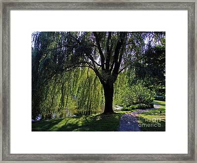 Weeping Willow Resting Place Framed Print by Mary Ann Weger