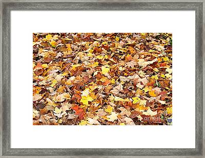 Welcome, Autumn  Framed Print by Casavecchia Photo Art