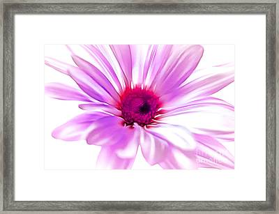 Welcome Spring Framed Print by Krissy Katsimbras