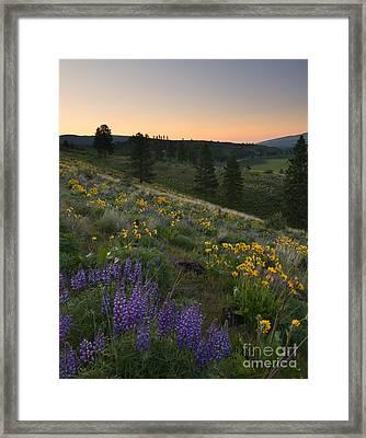 Wenas Spring Sunrise Framed Print by Mike Dawson