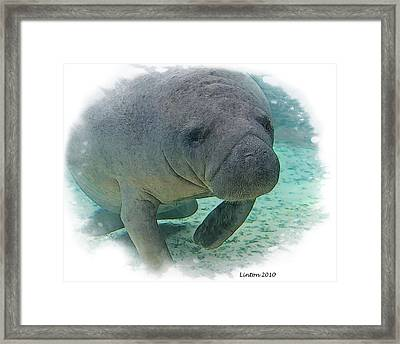 West Indian Manatee Framed Print by Larry Linton