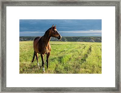 Western Stallion Framed Print by Todd Klassy