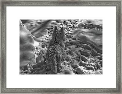 Westie On Ice Framed Print by Rosemary McGahey