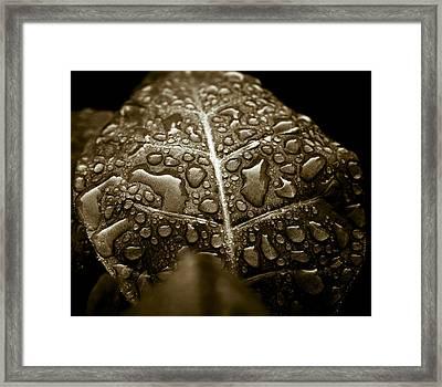 Wet Havana Tobacco Leaf Framed Print by Frank Tschakert