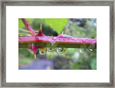 Wet Prick Framed Print by Donna Blackhall