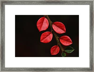 Wet Scarlet Framed Print by Connie Handscomb