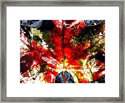 Wet Single Leaf Framed Print by Beth Akerman