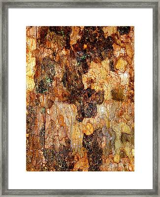 Wet Tree Bark 1 Framed Print by Beth Akerman